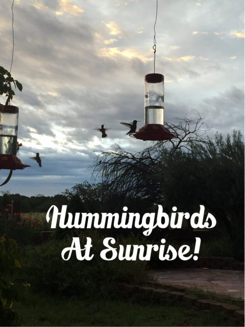 Hummingbirds-at-sunrise